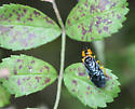 Possible Conifer Sawfly - Onycholyda amplecta - female