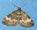 Small Rivulet - Perizoma alchemillata