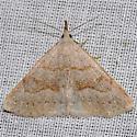 Stone-winged Owlet Moth - Chytolita morbidalis