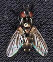 Fly - Admontia
