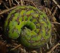 Caterpillar - Condica sutor