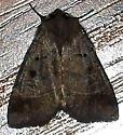 Unknown moth ? - Agnorisma