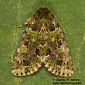 Paratrachea viridescens