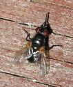 Small, black fly