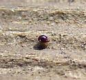 Tiny, Shiny Mite