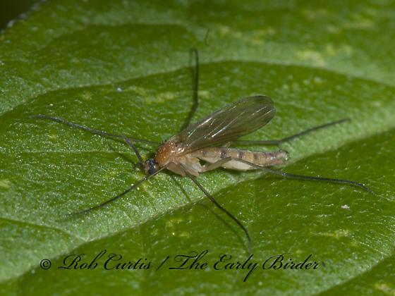 3014168 fly