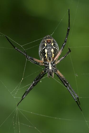 Big, honkin spider.