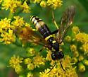 Goldenrod wasp? - Tenthredo basilaris