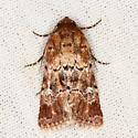 Moth - Properigea