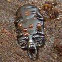 Mites on dead beetle - Hololepta