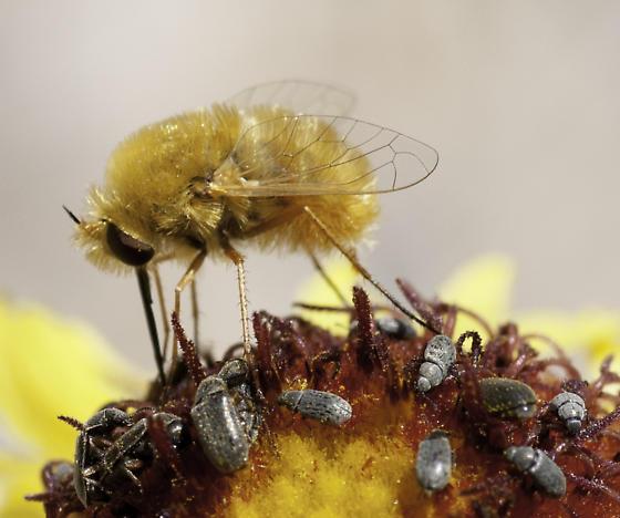 biodiversity! - Lordotus