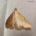 Moth June 9979 - Anania mysippusalis