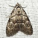 Ashy Meganola Moth - Hodges #8983.2 - Meganola spodia