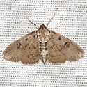 Crambid Snout Moth  - Hodges #5222 - Palpita arsaltealis