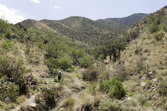 The trail up Florida Canyon