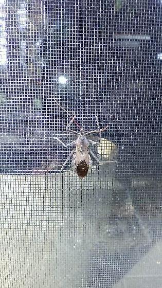 Unique bug I found