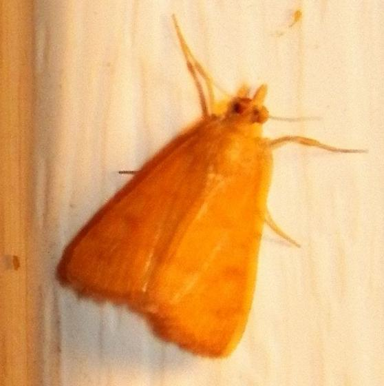 Moth 071418bbar