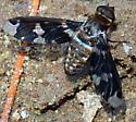 Looks like Exoprosopa dorcadion - Exoprosopa dorcadion
