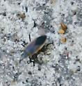 What is this bug?