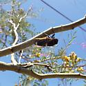 Cicada in southern NM