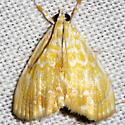Common Glaphyria Moth - Glaphyria glaphyralis