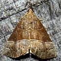 5/27/19 moth 2 - Hypena deceptalis
