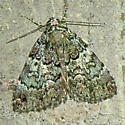 underwing, perhaps? - Allotria elonympha