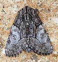 Brother Moth  - Raphia frater