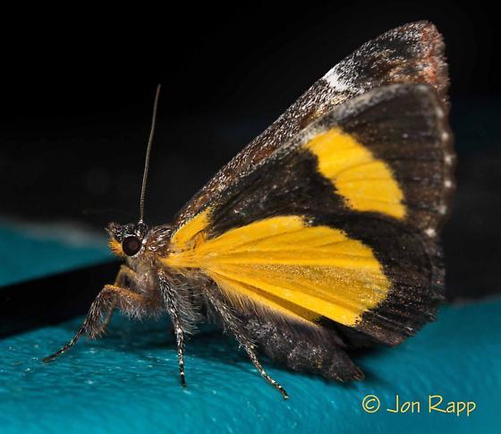 Moth - Gerra sevorsa