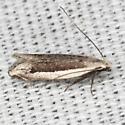 Moth - New-gen new-species