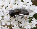 Fly ID Request - female