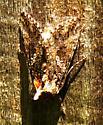 Moth 060817bar - Trichoplusia ni