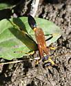 Wasp? - Sceliphron caementarium