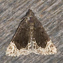 Moth on the shed wall - Hypena abalienalis - male