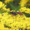 Parasitic Wasp - Cryptus albitarsis