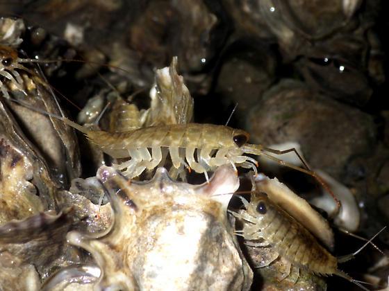 Gulf Shore Ocean Bugs