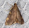 Moth needs ID - Hypsopygia olinalis