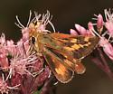 Leonard's Skipper - Hesperia leonardus - female