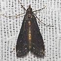 Black Langessa Moth - Hodges#4758 - Langessa nomophilalis