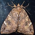 10aug2011-moth9 - Euparthenos nubilis