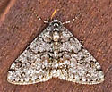 MothOnWall12292018_AC_5090 - Phigalia denticulata - male
