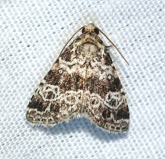 moth - N-genus n-sp