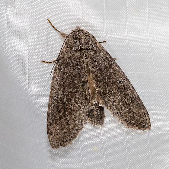 Moth TB 1 - BBNP