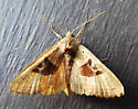 9547 – Phlogophora periculosa – Brown Angle Shades - Phlogophora periculosa