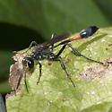 Thread-wasted(?) Wasp - Ammophila