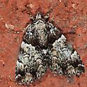 Moth to porch light - Allotria elonympha