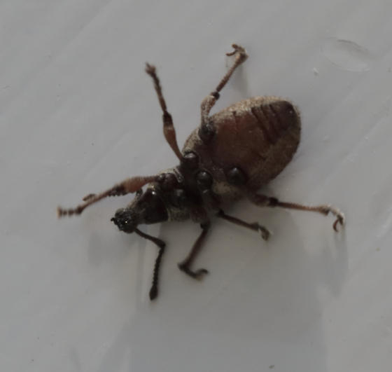 Beetle - unknown