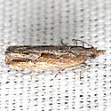 Bayberry Leaftier Moth - Hodges #2907 - Strepsicrates smithiana