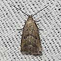Broken-line Hypenodes - Hodges#8421 - Hypenodes fractilinea