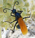 Wasp - Pepsis pallidolimbata - female
